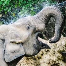 the thirsty elephant